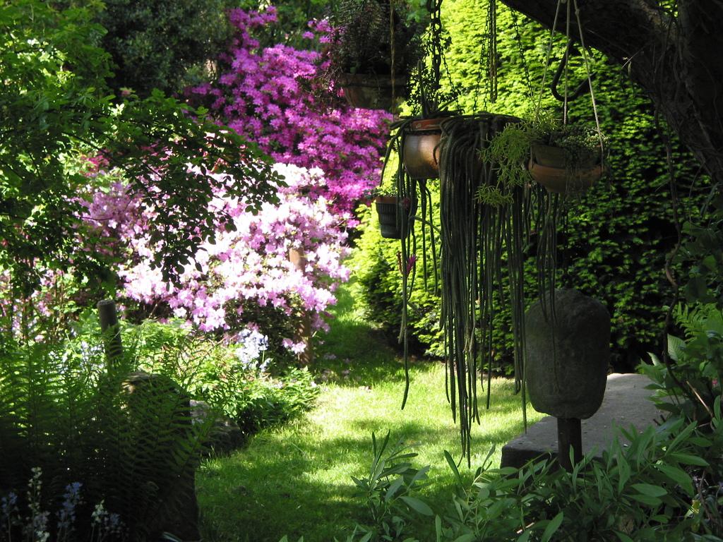 Kakteen in hängenden Töpfen im Garten
