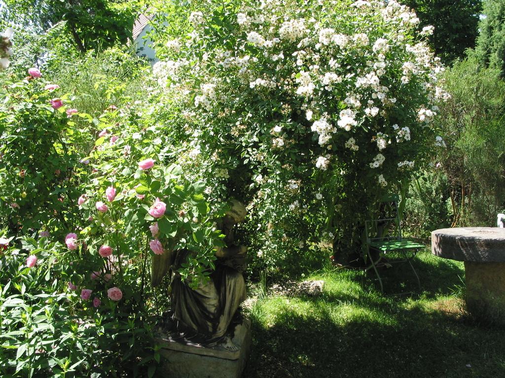 Im Sommer ist der Engel unter den üppigen Rosen kaum zu erkennen