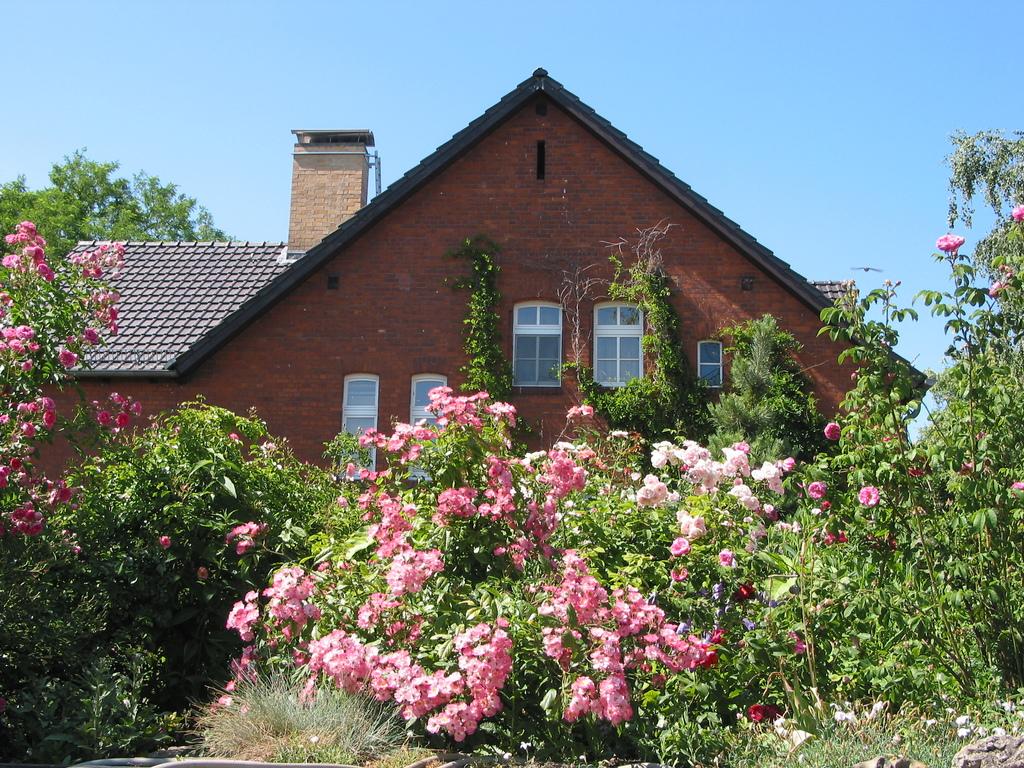 Rosen auf dem begrünten Dach