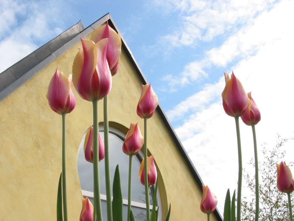 Begrüntes Dach der Galerie: Tulpen