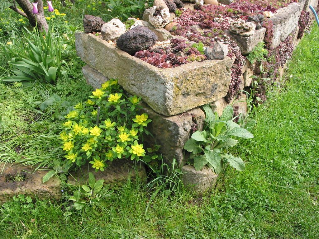 Trockenmauer mit Sempervivum