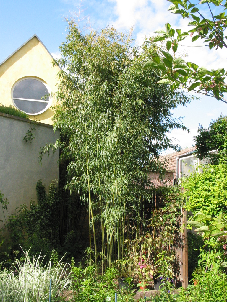 Bambus an der Galerie