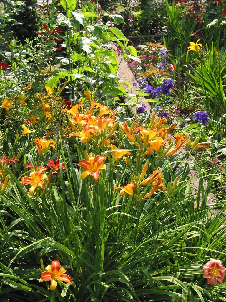 Taglilien und Rittersporn