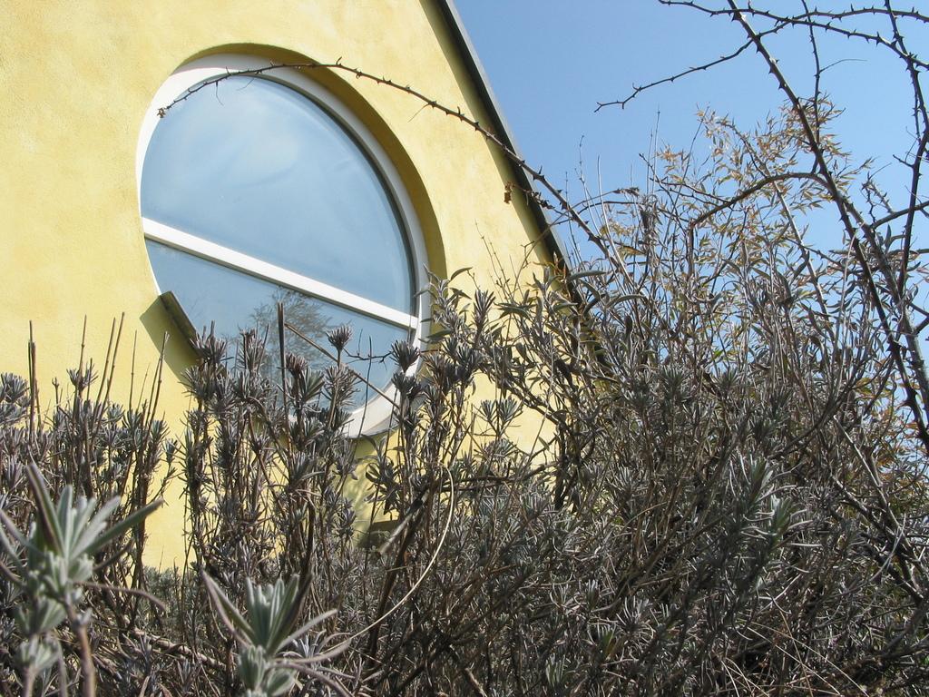 Lavendel auf dem Dach der Galerie