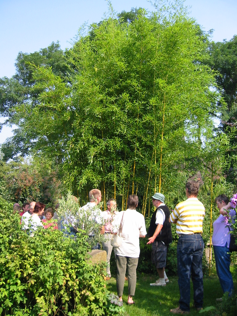 Bambusfest: Hans-Peter Bethke zeigt den Besuchern den Bambus