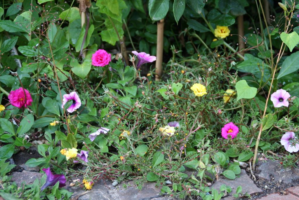 Petunien und Portulakröschen