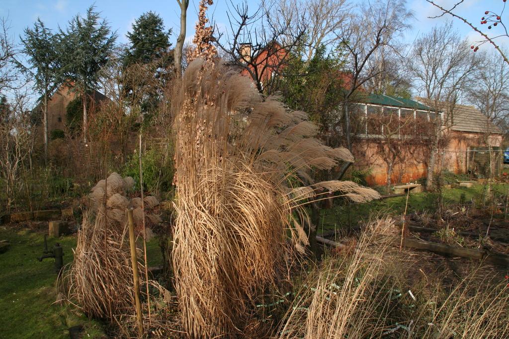 Gräser im winterlichen Garten
