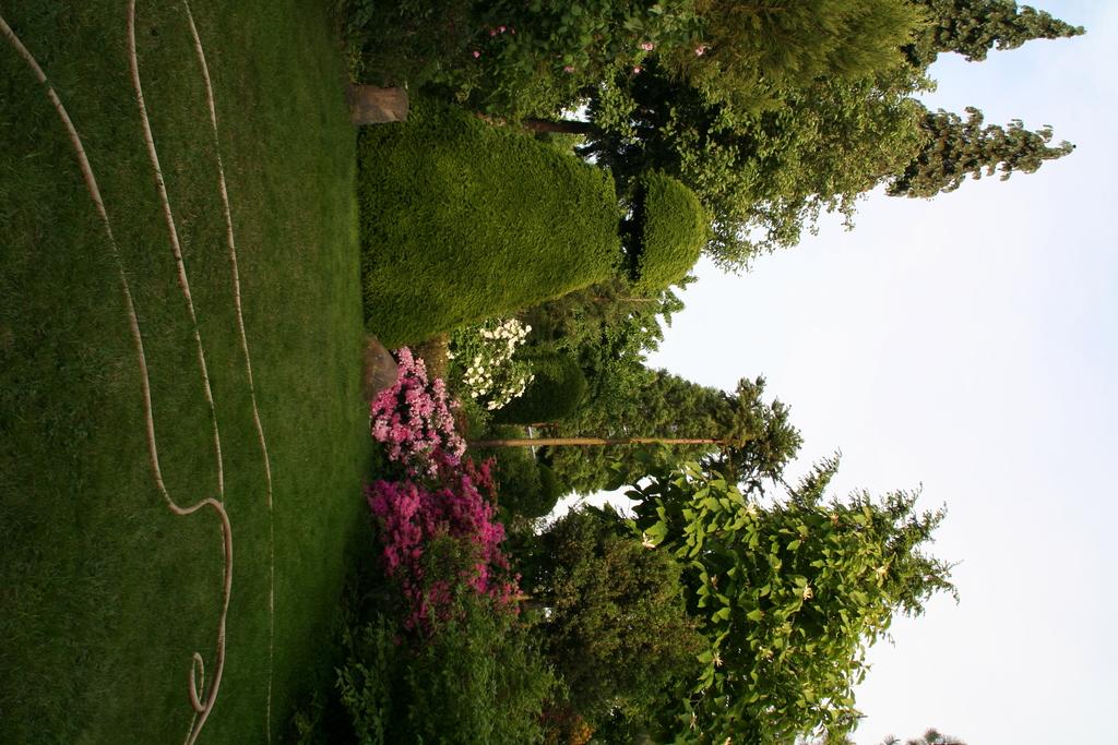 Gartenansicht mit Rhodendron, Buxus und Schlauch