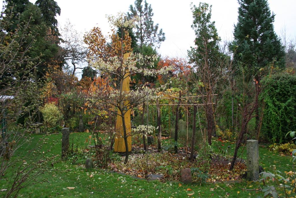 Die Blätter sind ab und langsam beginnen die Strukturen der Gehölze hervorzutreten.