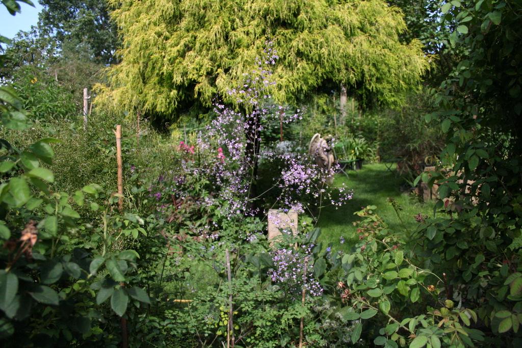 Gartenansicht, im Vordergrund Wiesenraute