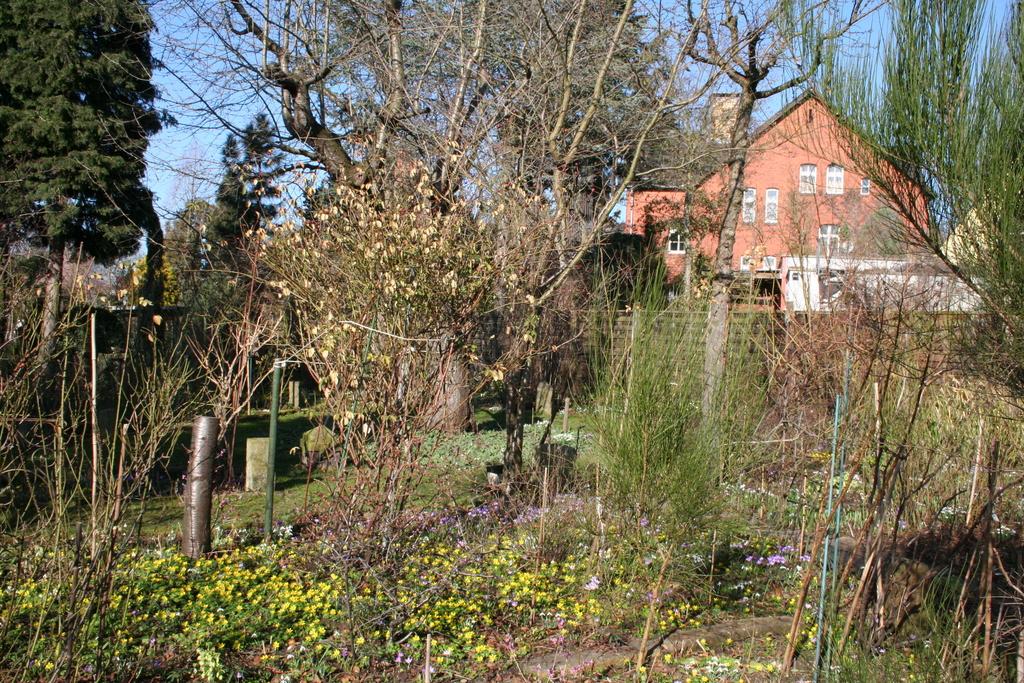 Februar 2014: Ein Garten voller Frühblüher