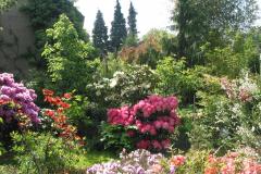 Rhododendron mit Azaleen