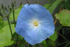 blaue Winde