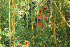 Durchblicke auf Holzskulptur (vor gelbem Bambus)