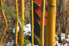 gelber Bambus mit Holzskulptur