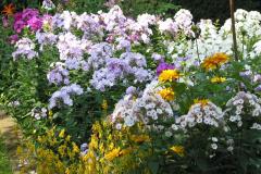Phlox mit Rudbeckia und Taglilien