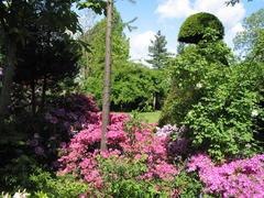 Azaleen und Rhododendron