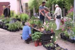 Bambusfest: Pflanzenverkauf und Beratung von freundlichen Gärtnern der Region
