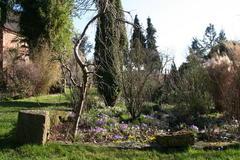 spätwinterlicher Garten mit Krokussen und Winterlingen