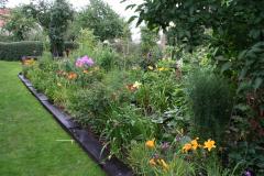 Taglilien im Bauerngarten