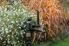 Herbstastern, Pumpe