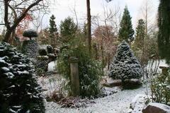 Buxus und Bambus setzen grüne Akzente im winterlichen Garten