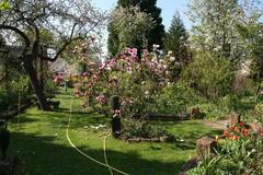 Magnolie und blühende Obstbäume