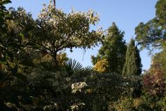 75. Geburtstag Hanspeter Bethke Gartenansicht im Oktober