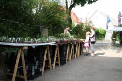 Rosenfest 2011: Stachlige Gesellen in großer Zahl und Auswahl