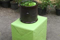"""Rosenfest 2011: Das kürzlich getaufte """"Glühwürmchen"""", eine Neuzüchtung von Roland Graeff soll anlässlich des Rosenfestes gepflanzt werden."""