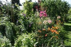 Lilien im Staudenbeet