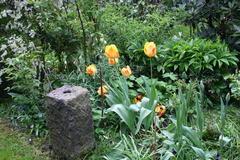 7. Mai 2013: Tulpen