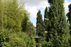 Juli 2014: Bambus und Gehölze