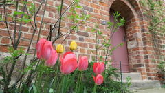 April 2016 - Tulpen am Eingang zur Kirche